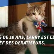 Larry le chat continuera d'officier au 10 Downing Street