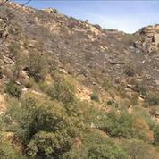 Pyrénées-Orientales : les pompiers restent vigilants face au risque de reprise des incendies