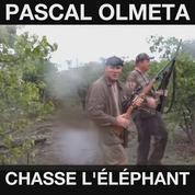 Les chasses à l'éléphant et à l'ours de Luc Alphand et Pascal Olmeta font polémique