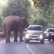 Un éléphant bloque une route en Thaïlande