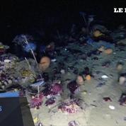 Des images à couper le souffle des fonds marins sous la glace de l'Antarctique