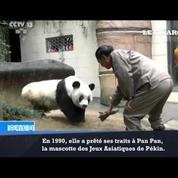Le panda le plus vieux du monde fête ses 37 ans