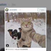 Découvrez Manny, le chat qui prenait des selfies