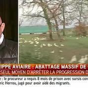 Grippe aviaire : abattage massif de canards dans le Sud-Ouest