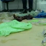 Plus de 30 sacs en plastique retrouvés dans le corps d'une baleine