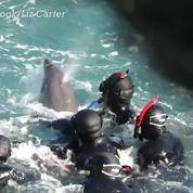 Un femelle dauphin tente désespérément de protéger son petit des chasseurs japonais
