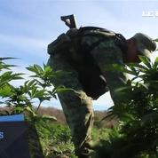 Au Mexique, l'armée saisit 15 hectares de cannabis et d'opium