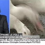 Grippe aviaire : tous les canards des Landes vont être abattus