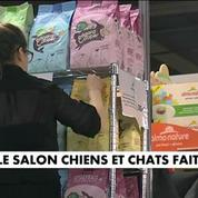 Un salon à Paris pour les amoureux de chiens et de chats