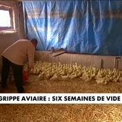 Grippe aviaire : six semaines de vide sanitaire