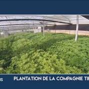 Israël mise sur un nouveau business : le cannabis thérapeutique
