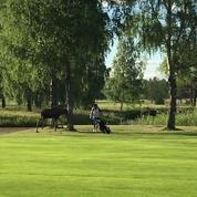 Un golfeur poursuivi par un élan en Suède