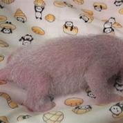 Les irrésistibles images d'un bébé panda dans un zoo de Tokyo