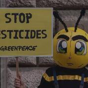 Que sont les néonicotinoïdes, les pesticides tueurs d'abeilles qui font polémique?