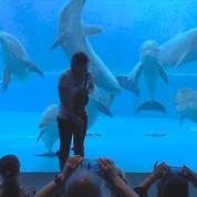 Ces dauphins exécutent une chorégraphie sur la musique d'une violoniste