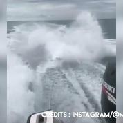 Une vidéo d'un requin maltraité scandalise les internautes