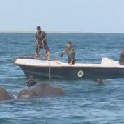 Sri Lanka: le sauvetage haletant de deux éléphants pris au piège dans des courants maritimes