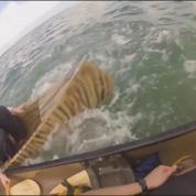 Floride: un requin attaque des personnes en canoë à plusieurs reprises