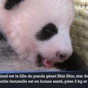 Le bébé panda du zoo de Tokyo fête ses 2 mois
