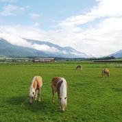 Faites le tour des Alpes en cinq pays