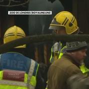 Incendie au zoo de Londres : un animal mort, quatre portés disparus