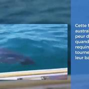 Australie : une famille en train de pêcher sur un bateau, encerclée par un grand requin !