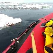 Un pingouin s'incruste sur le bateau d'une équipe de chercheurs en Antarctique
