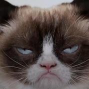 Un chat gagne 710.000 euros au tribunal