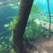 Le spectacle d'un jardin submergé au Brésil