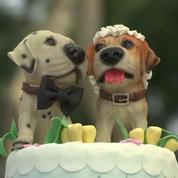 Pérou : quand des chiens se marient