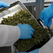 Un des leaders canadiens du cannabis fait son entrée sur le Nasdaq