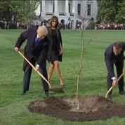 Visite d'Emmanuel Macron aux États-Unis : les présidents français et américain plantent un arbre