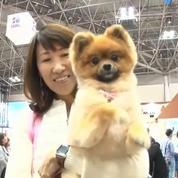 Tapis roulant, lunettes de soleil : la folie des gadgets pour animaux au Japon