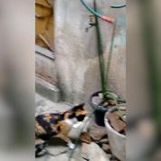 Un rat échappe à un chat de façon époustouflante
