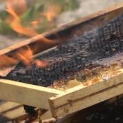 Pesticides: des apiculteurs contraints de brûler leurs ruches