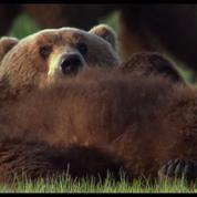 Les pitreries des ours, extrait exclusif d'Un Nouveau Jour sur Terre