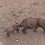 Braconnage : une centaine d'éléphants tués au Botswana