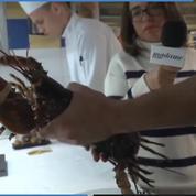 «Madame en cuisine» : comment bien cuire et préparer un homard ?