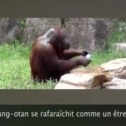 Zapping Web best of 2014 : les animaux sont épatants !