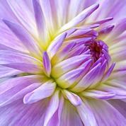 Comment entretenir un beau massif de fleur