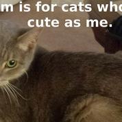 Comment les chats ont conquis Internet