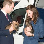 Kate Middleton et le prince William : la famille royale sur le point de s'agrandir