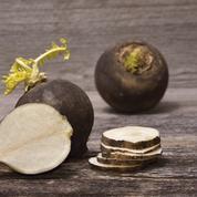 Vitamines, antioxydants : le radis noir, atout santé de la saison