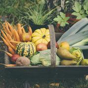 Fruits, légumes, fromages, poissons... Que mange-t-on en automne?