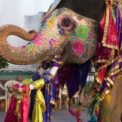 TripAdvisor dit non aux attractions touristiques maltraitant les animaux