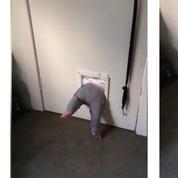 Un bébé néo-zélandais s'enfuit de chez ses parents par la chatière