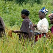 Le réchauffement climatique touche plus les femmes dans les pays en voie de développement
