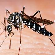 Virus Zika, le nouveau fléau propagé par les moustiques
