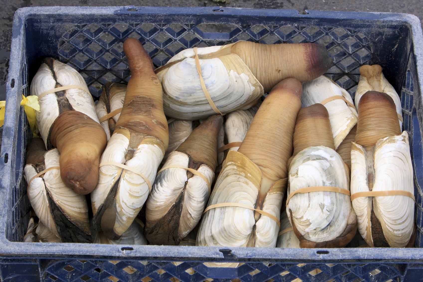 Le panope, l'étrange mollusque que les connaisseurs s'arrachent - Cuisine / Madame Figaro