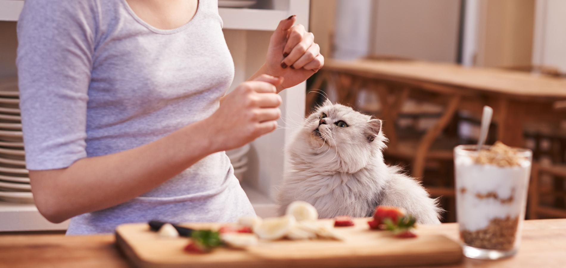 Est il bien raisonnable de cuisiner pour son chat - Cuisiner les coulemelles ...